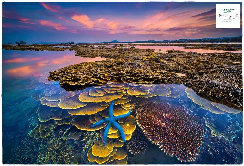 san hô hòn yến phú yên